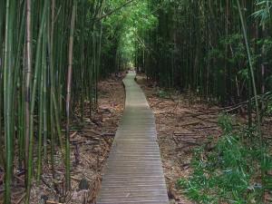 Pipiwai-Trail